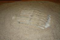 Kokkosaurus (nimetty löytäjän mukaan)
